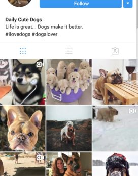 Dogs Instagram account buy