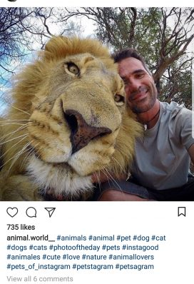 buy instagram account animals