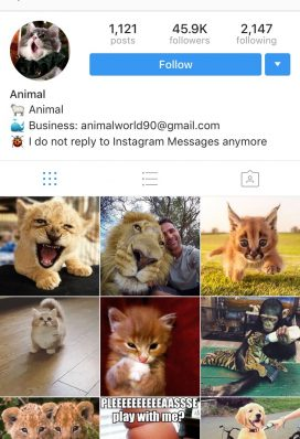 45k instagram account animals 2