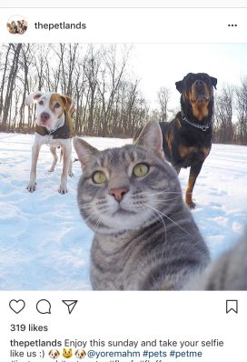 instagram account animals