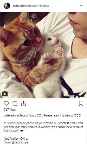 cat instagram account