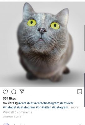buy instagram account cats