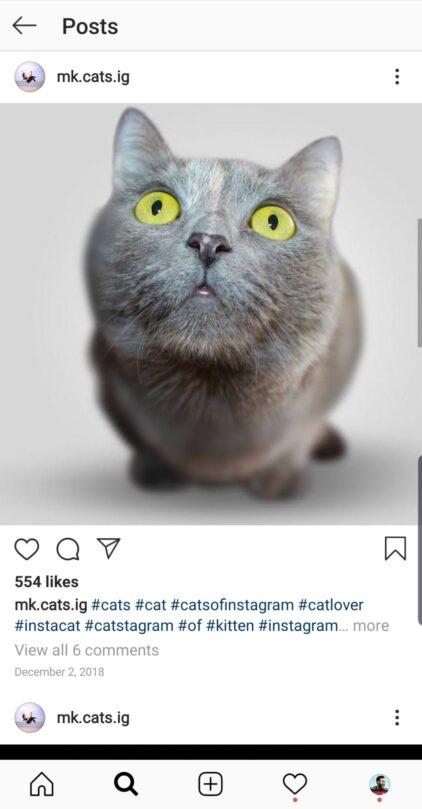 buy instagram account cats
